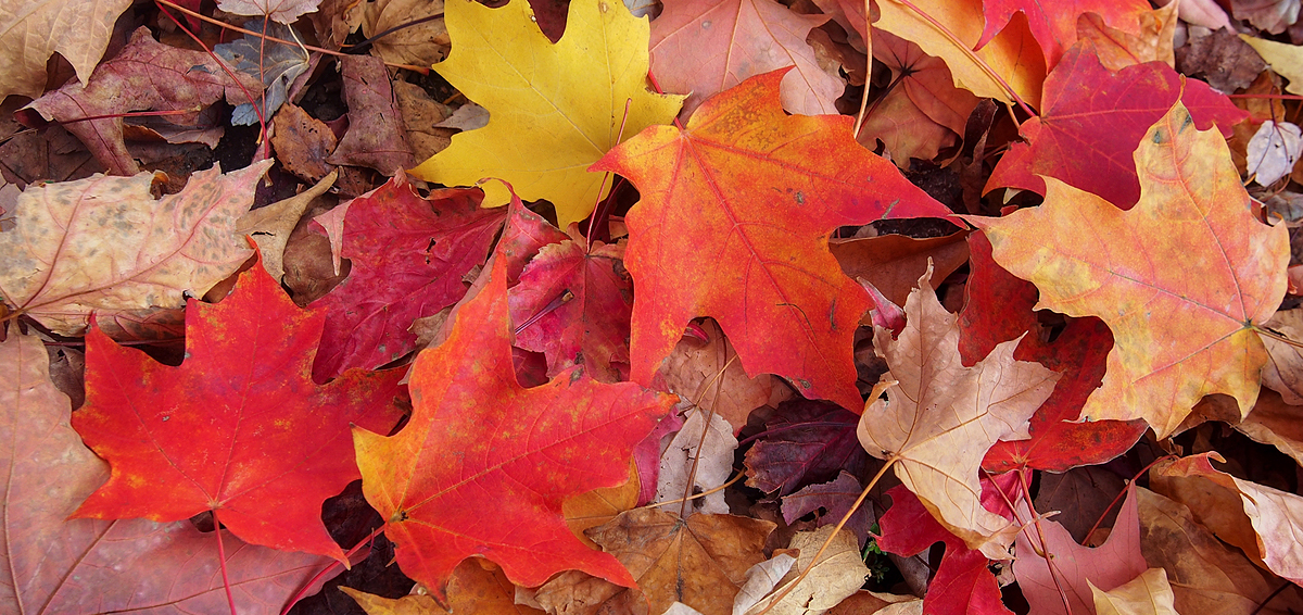 Beautiful colorful leaves