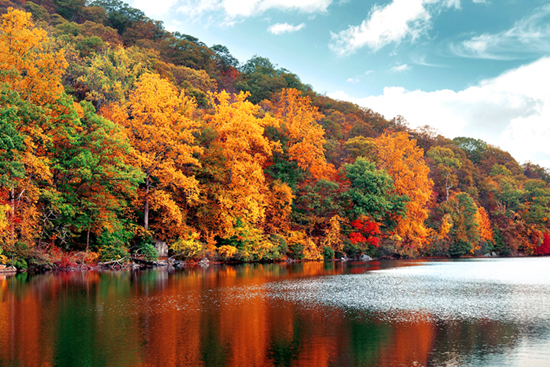 Fal color trees on a lake